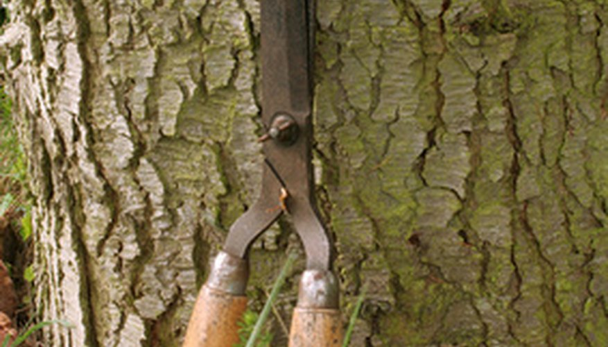 Pruning shears feature long blades for easy cutting of ornamental grass.