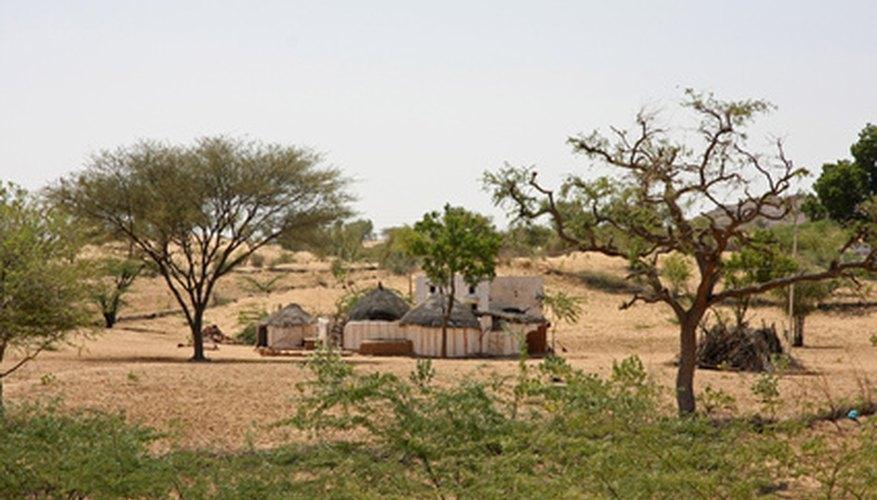 Desert Plants in India | Garden Guides