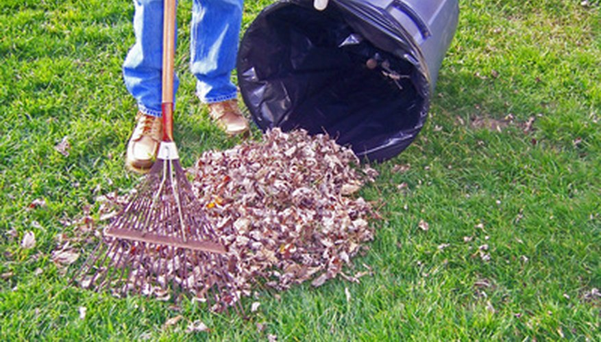 Rake your lawn throughout the year to keep it neat.