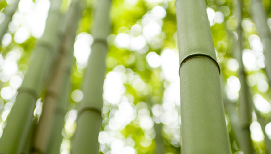 Bamboo can add grace and elegance.