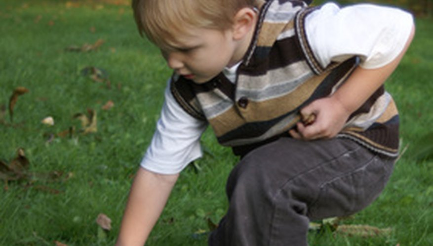 Every fall, European children collect conkers for conker fights.