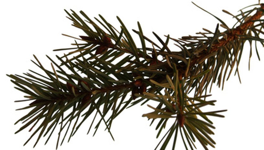 Pine branches have sturdy tips for grave pieces.