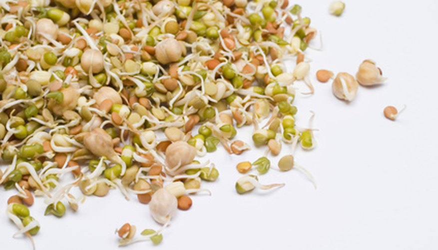 Sprouts have been grown and consumed by humans for thousands of years.