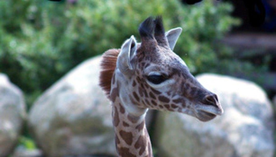 Los temas de safari para un baby shower son neutrales de género y sencillos de hacer.