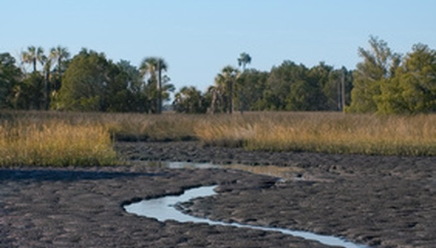 Anaerobic respiration occurs in oxygen-poor marsh muds.