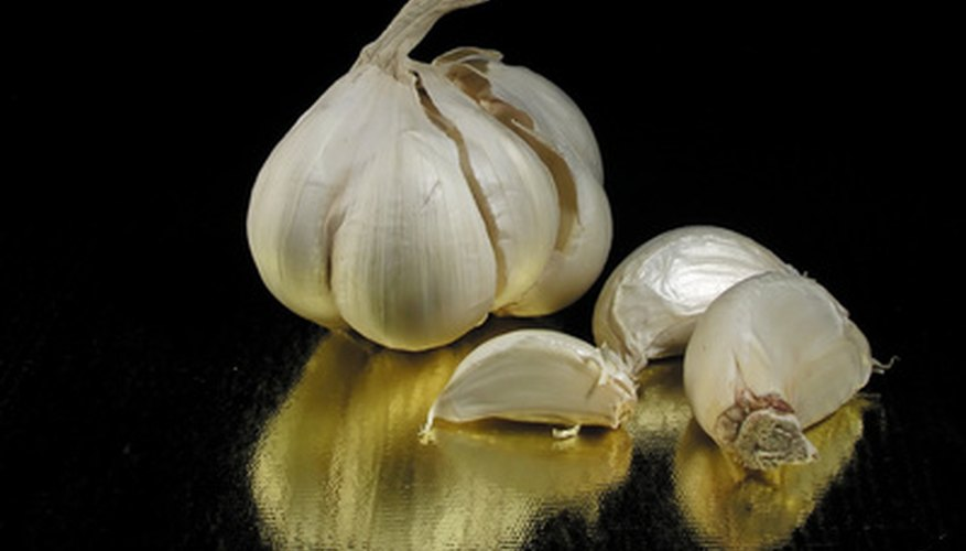 Garlic bulbs are round bulbs that are segmented into cloves.