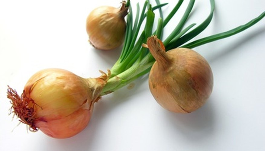 Plant onion sets in late spring.