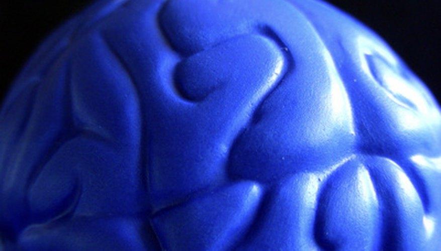 External brain model.