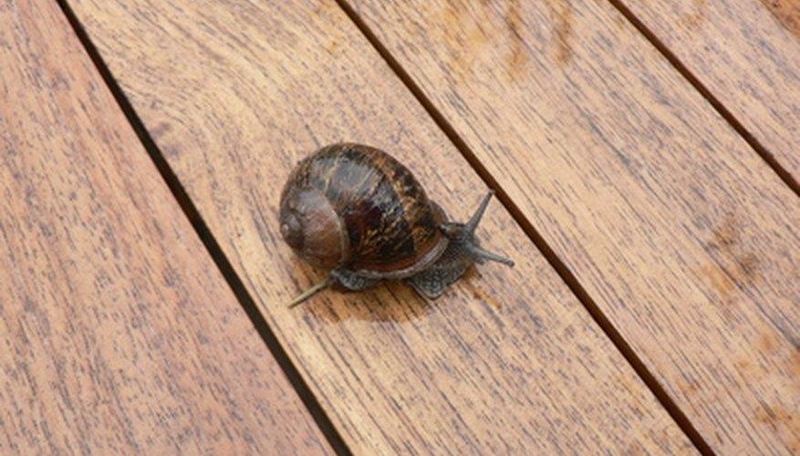 Aprende sobre los caracoles mediante un proyecto de ciencias.