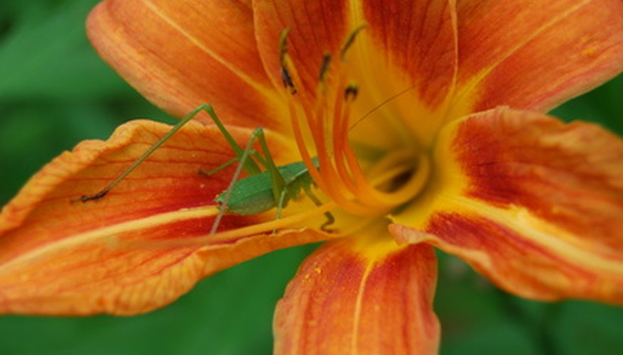 Day lilies are one of the few plants that produce blooms in dry shade.