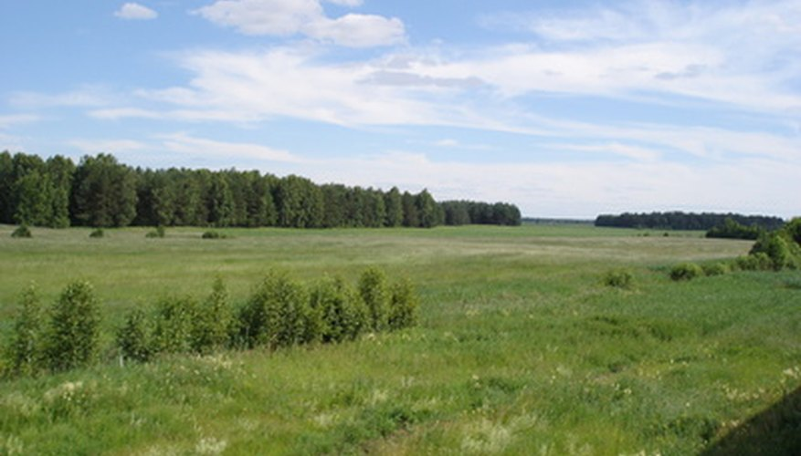 Native grasslands provide fodder for ranging animals.