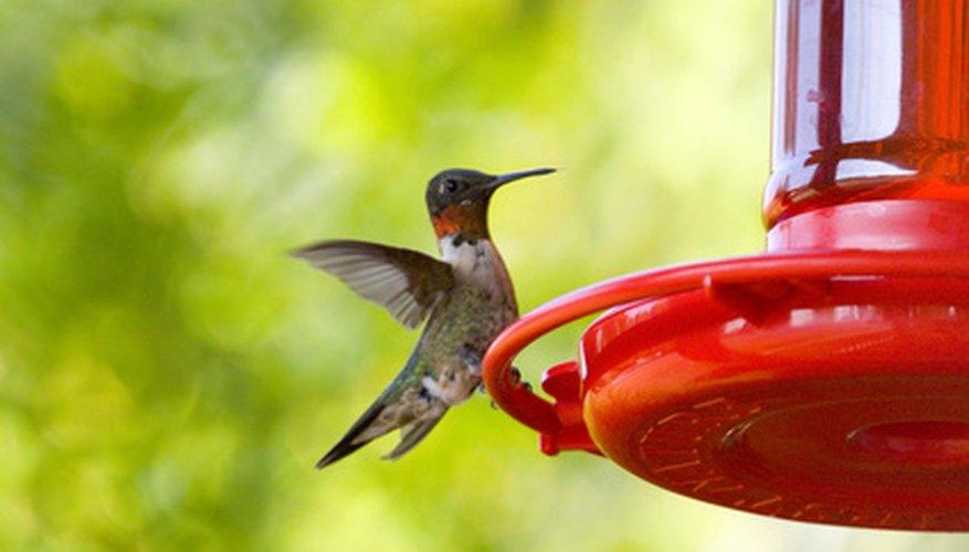 Los colibríes son silvestres y exóticos y es probable que estén en tu propio patio.
