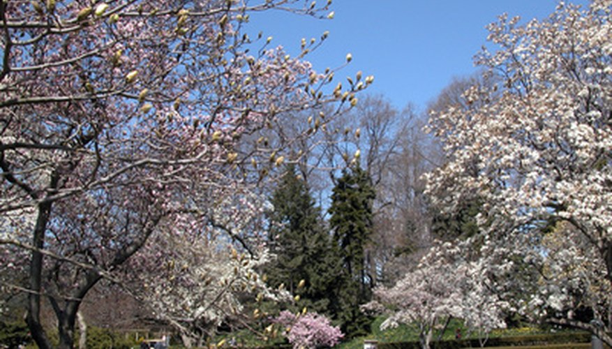 Flowering trees add spring color.