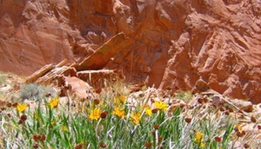 Desert flowers come in a range of hues.