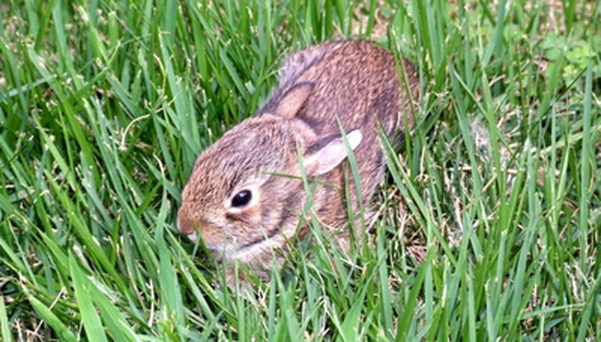 This bunny gets energy from the grass it eats, which got its energy from the sun.