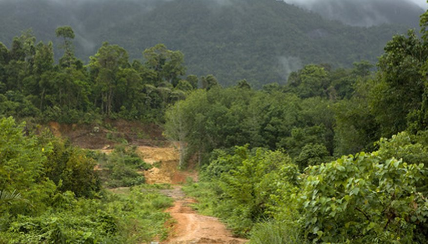 Tropical rainforests are home to millions of plant and animal species.