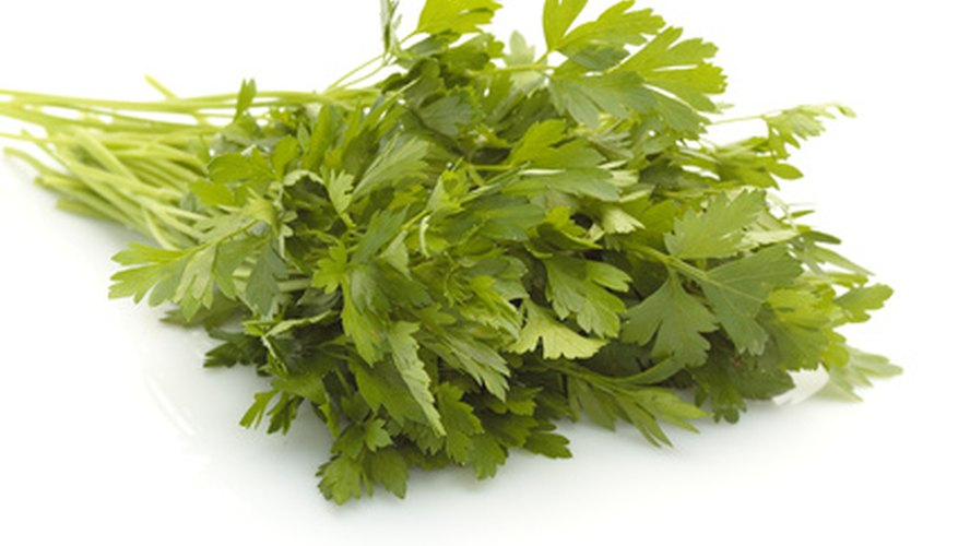Fresh cut bundles of parsley can be a best-seller for you.