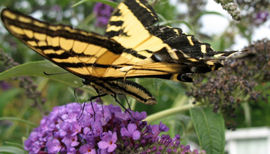 Plant a flower garden to attract butterflies.