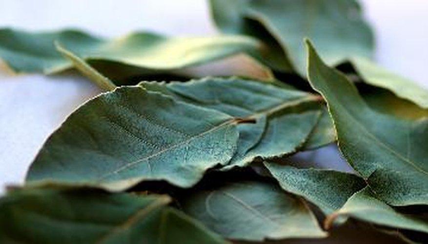 La clorofila se encuentra principalmente en las plantas.