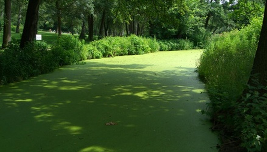 Many plants float on the canal's water surface.