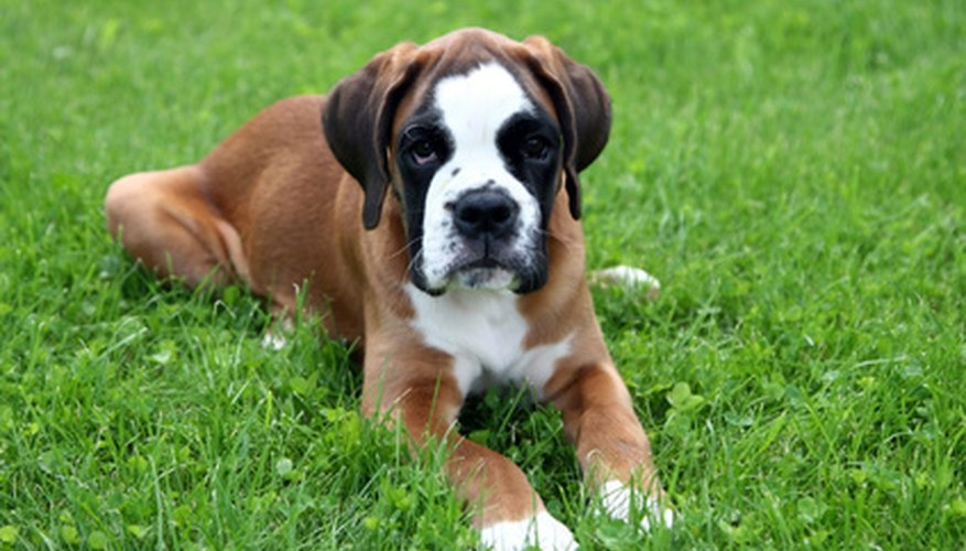 Keep pets off grass after chemical application.