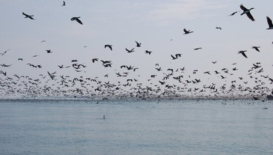 Birds can destroy crops or disturb al fresco diners.