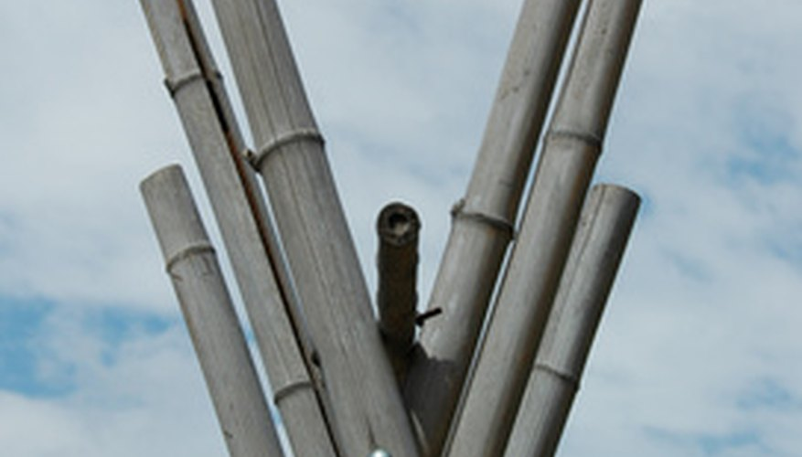 Bamboo culms are often used as a construction lumber