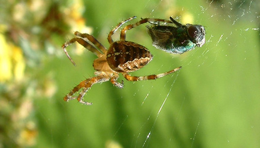 A spider and an insect are connected in this food chain.