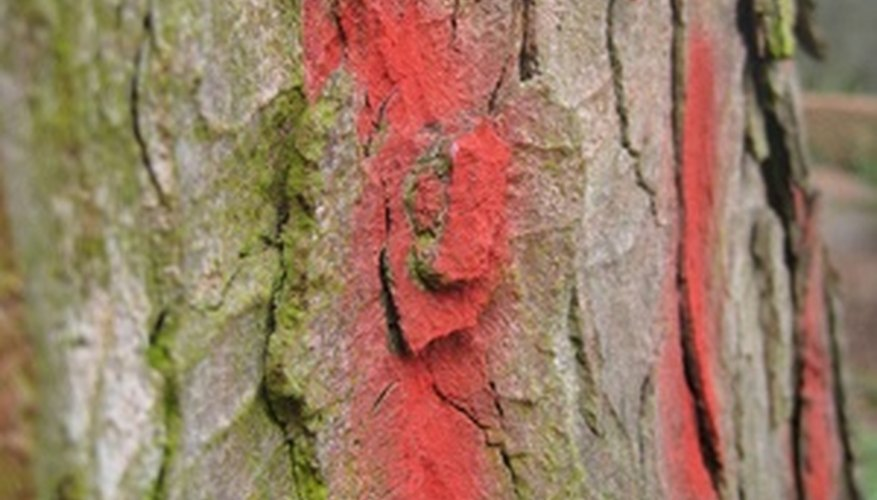 Spray paint may be removed from a tree by using mineral spirits or gently scraping it away.