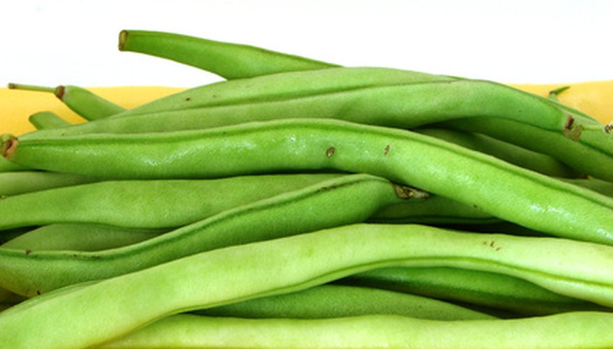 Pole beans can thrive in a container garden