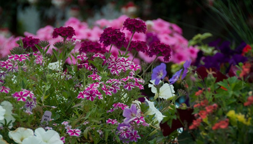Annuals are fast-growing, inexpensive garden plants for one growing season.