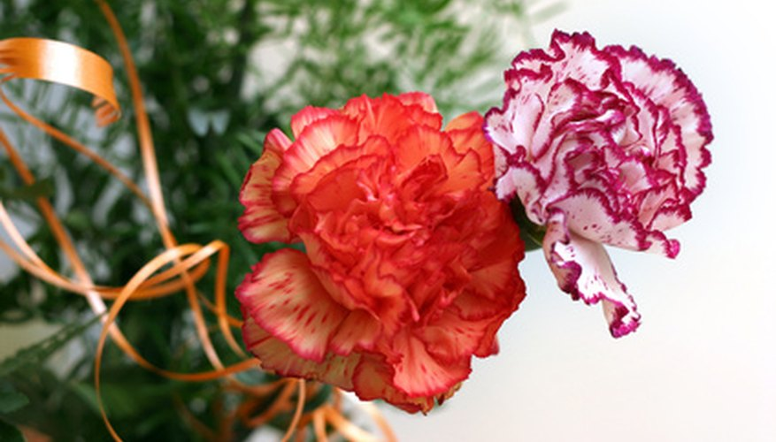 Carnations are common flowers used to make corsages.
