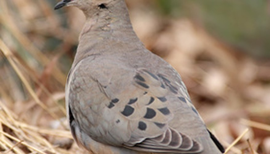 how to feed wild birds and doves sciencing
