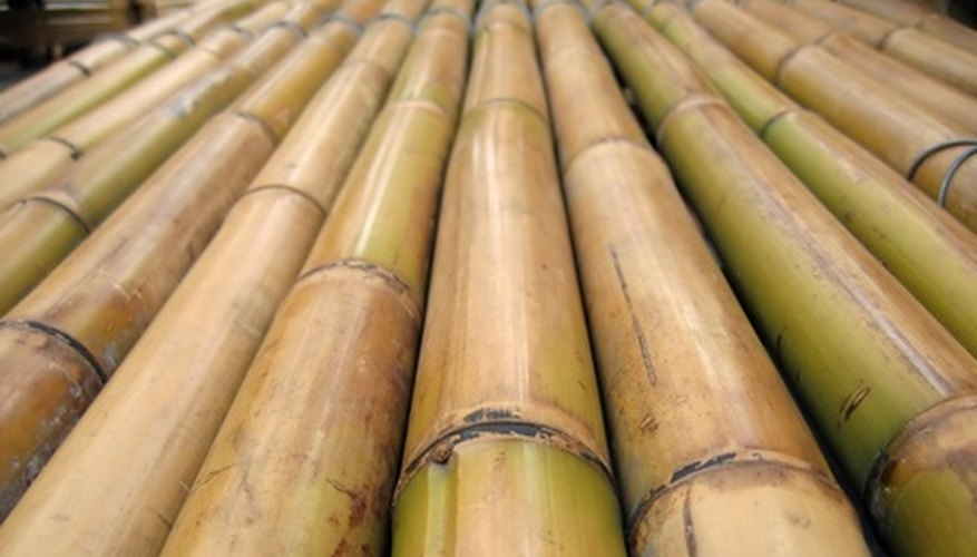 Bamboo Poles for a Bean Trellis