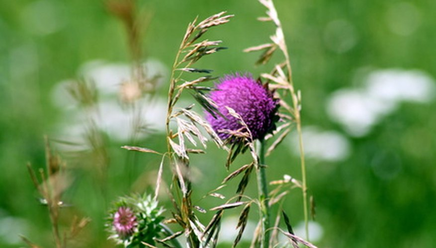 Landscape fabric prevents weeds like thistle from growing in the garden.