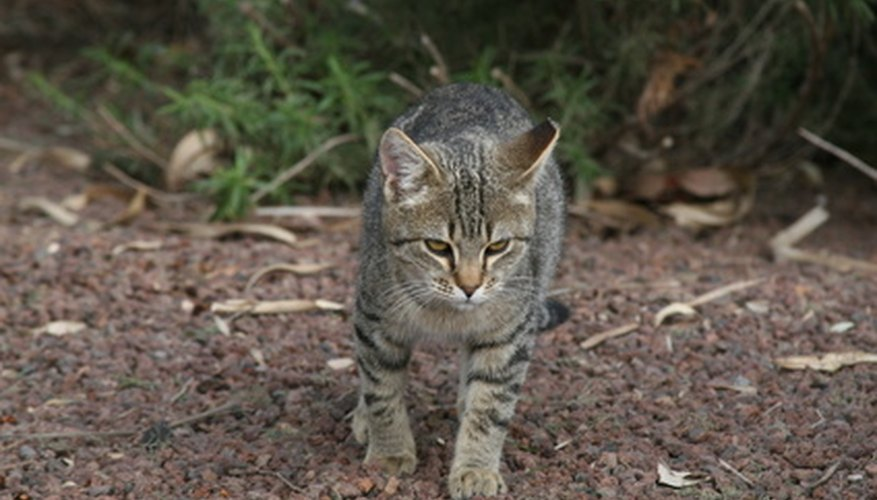 Stray cats can be major pests in your yard.