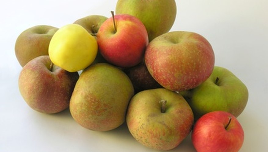 Winter apple varieties are usually quite colorful.