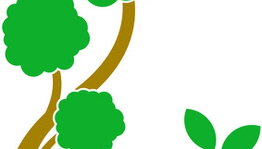 El símbolo de un árbol es usado en un escudo de armas para representar una nueva vida que brota de la vida antigua.