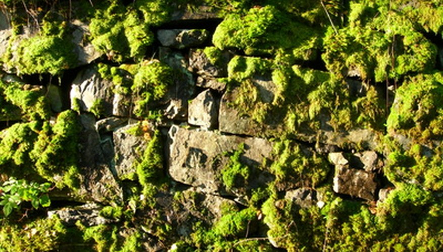 Moss can even grow on rocks.