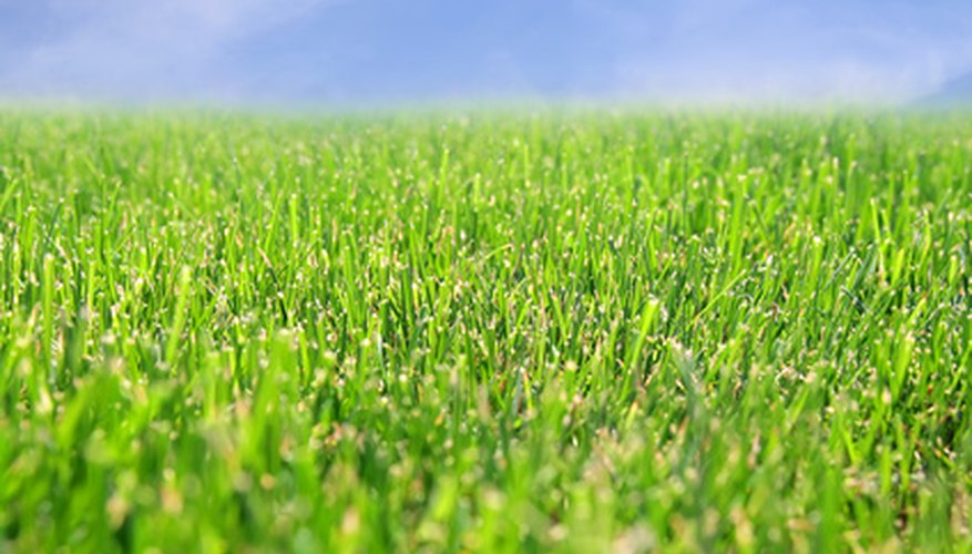 A green lawn in Arizona is achievable with the right groundwork.