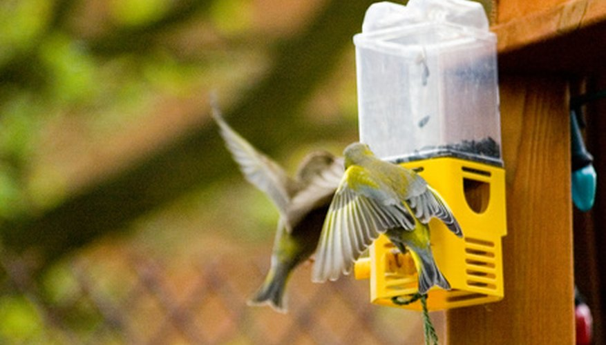 Female gold finches at feeder