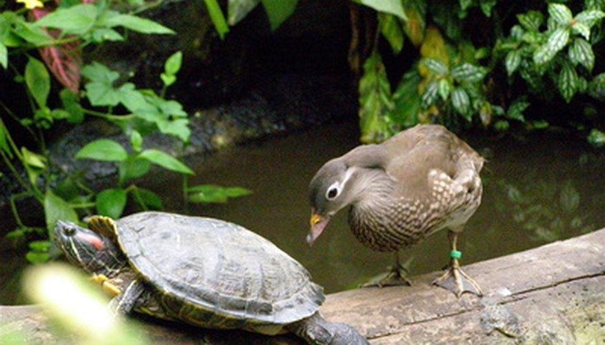¡Las aves y reptiles son más similares de lo que piensas!