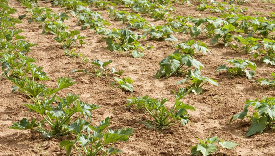 Plant vegetable seeds in rows.