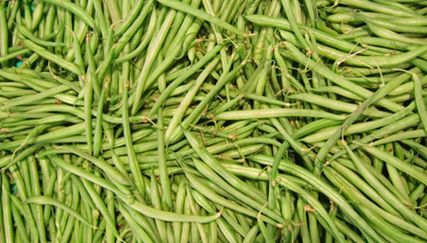 The taste of fresh green beans make collecting seeds worth it.