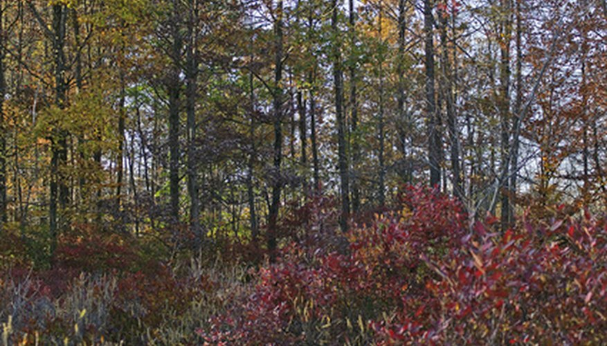 Native plants fill New Jersey's woods with autumn color.