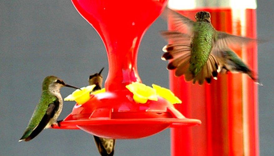 Mi Ballard & raquo; Tema: colibríes no alrededor