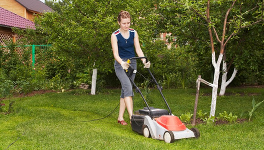 Mow fescue lawns high for optimum health.