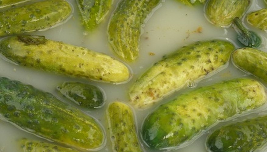 Pickling cucumbers floating in brine.