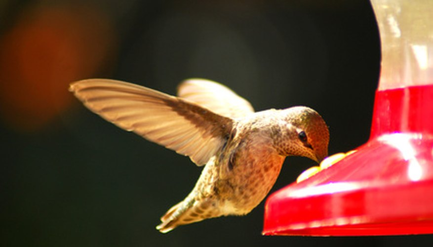 A hummingbird feeder can bring interesting visitors to your townhouse garden.