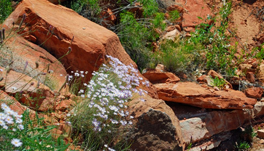 Native plants, xeriscaping and rain gardens lead to lower-maintenance landscapes.